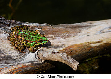 green frog on a tree