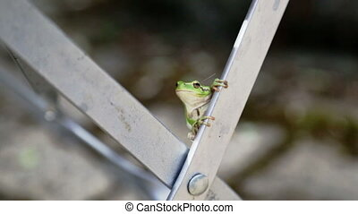Green frog on Chair in Garden two