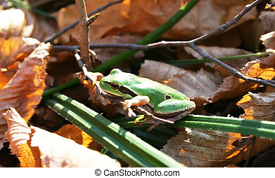 Green frog on the leaves