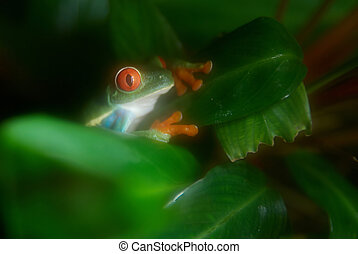 Green frog on the tree