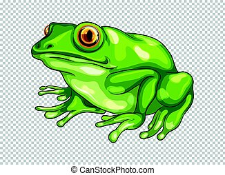 Green frog on transparent background