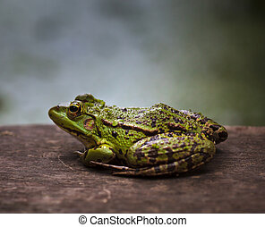 Green frog outdoor