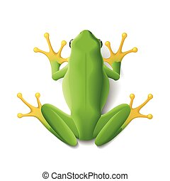 Green frog vector illustration