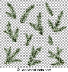 Green Fur-tree Branch, Vector Illustration