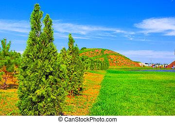 Green garden with thuja