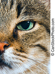 Green glance - cat carefully looking into the camera