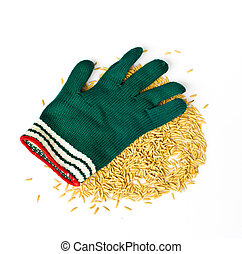 green gloves and rice grain