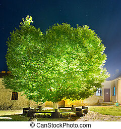 Green glowing tree in the night park under sky with many...
