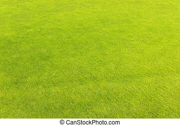Green golf field grass background