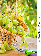 green grape in busket on table in garden