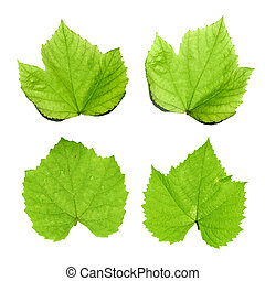 Green grape leaves isolated on white