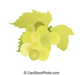 green grape on a white background. vector graphics