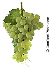 Green Grapes. - Banch of green grapes isolated on white...