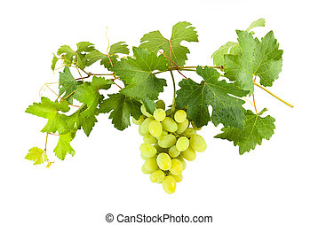 Green grapes on branch - Ripe green grapes on branch with ...