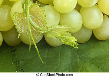 Green grapes on leaves