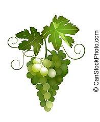 green grapes - vector illustration