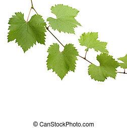 green grapevine leaves as border