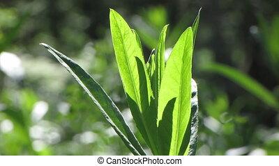 Green grass 1