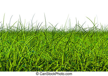 Green grass, 3D rendering isolated on white background