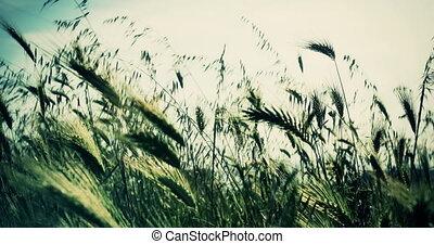 green grass 4k