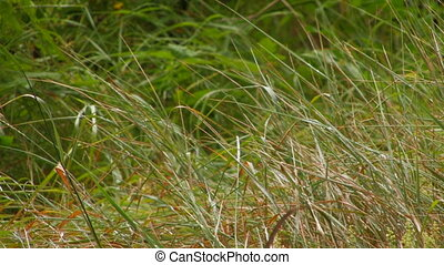 green grass after rain closeup