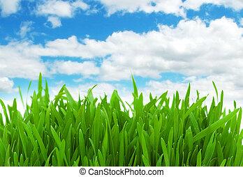 Green grass against blue sky