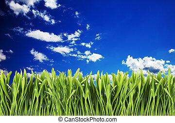 Green grass against cloudy sky