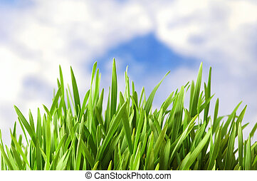 Green grass against the bright blue sky