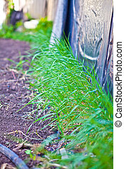 Green grass against the wall