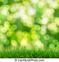 green grass and bokeh lights