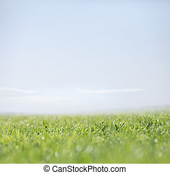 Green grass and clear sky as nature background