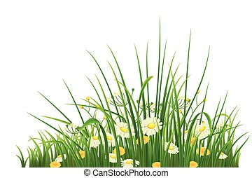 Green grass and flowers - Spring green grass, herbs and...