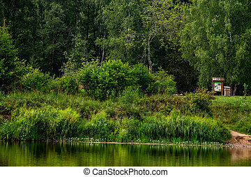 Green grass and forest on the river bank. - Long green grass...