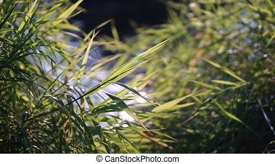 Green grass and glittering water shallow focus shot clip