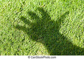 Green Grass and hand shadow