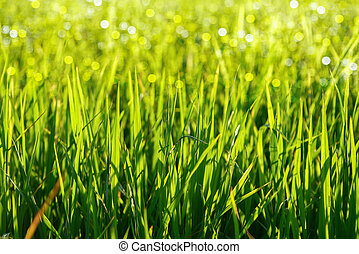 green grass and light.