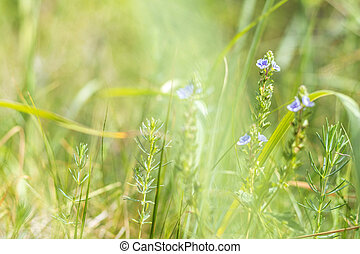 Green grass and tender blue flowers in the field