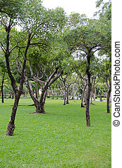 Green grass and trees in park