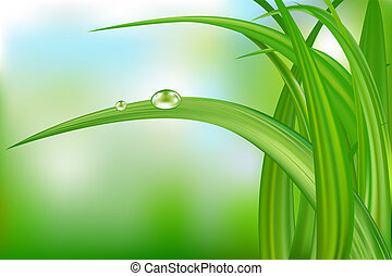 Green Grass And Water Drops.