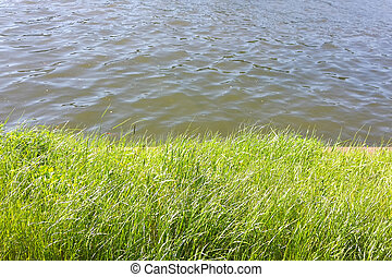 Green grass and water in spring