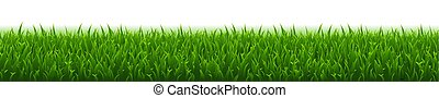Green Grass And White Background