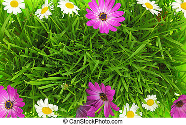 Green grass and white, pink flowers background