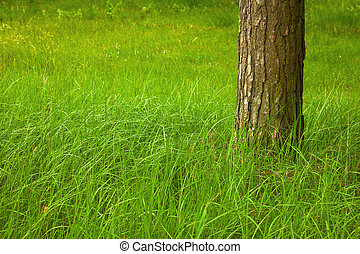Green grass at foot of large tree