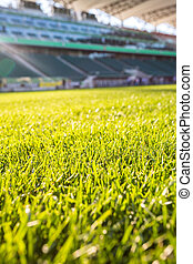 Green grass at modern stadium during sunny day