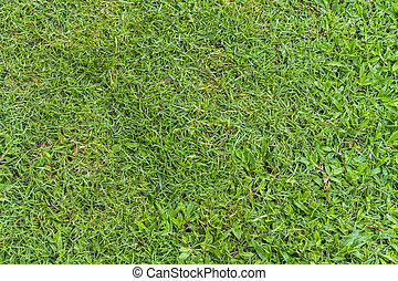 Green grass background and texure soccer field