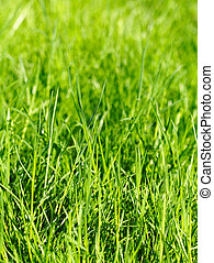 green grass background close up image