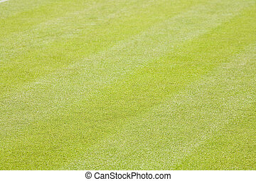 Green grass background - Closeup of a well kept lawn with...
