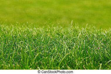 Green grass background, focus on foreground