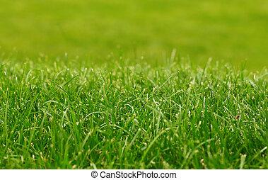 Green grass background, focus on foreground