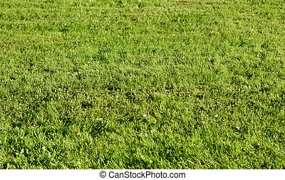 Green grass background. - Green grass, can be used as ...